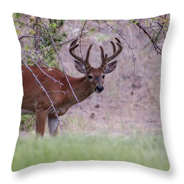 Throw Pillow featuring the photograph Red Bucks 2 by Antonio Romero