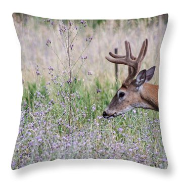 Throw Pillow featuring the photograph Red Bucks 4 by Antonio Romero