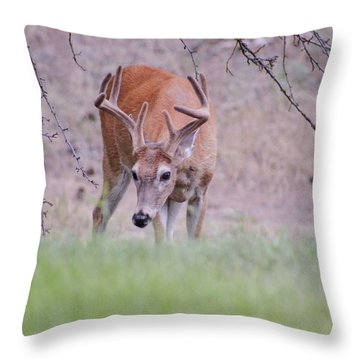 Throw Pillow featuring the photograph Red Bucks 6 by Antonio Romero