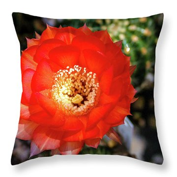 Red Cactus Bloom Throw Pillow