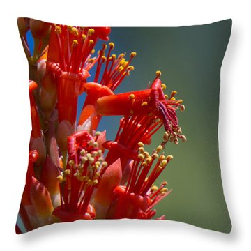 Red Cactus Flower 1 Throw Pillow