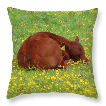 Red Calf In The Buttercup Meadow Throw Pillow