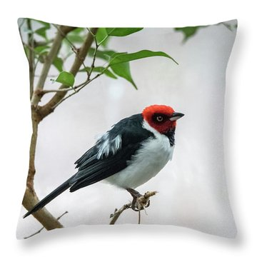 Red Capped Cardinal 2 Throw Pillow