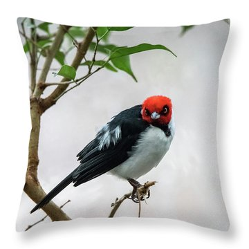 Red Capped Cardinal Throw Pillow