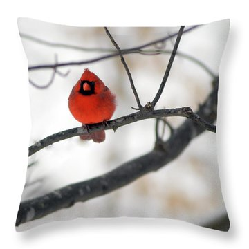 Throw Pillow featuring the photograph Red Cardinal In Snow by Marie Hicks