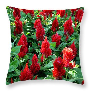 Throw Pillow featuring the photograph Red Celosia Garden by Glenn McCarthy Art and Photography