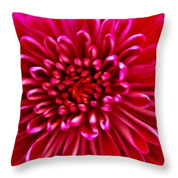 Red Chrysanthemum Throw Pillow