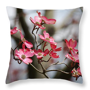 Red Cloud Dogwood 2012410_90a Throw Pillow by Tina Hopkins