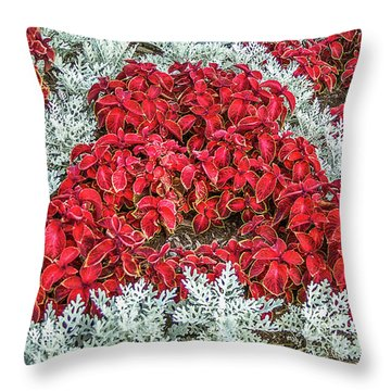 Throw Pillow featuring the photograph Red Coleus And Dusty Miller Plants by Sue Smith