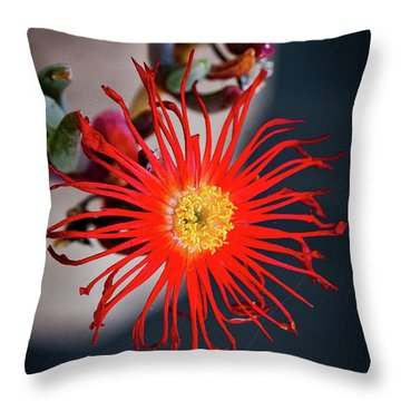Red Crab Flower Throw Pillow