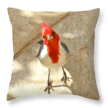 Red-crested Cardinal At My Feet Throw Pillow