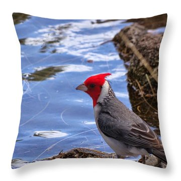 Red Crested Cardinal Throw Pillow