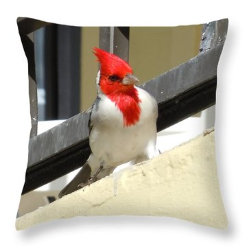 Red-crested Cardinal Posing On The Balcony Throw Pillow