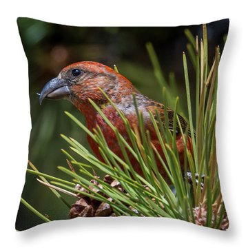 Red Crossbill Throw Pillow by Michael Cunningham