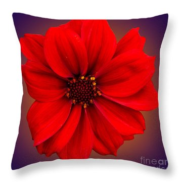 Throw Pillow featuring the photograph Red Dahlia-bishop-of-llandaff by Brian Roscorla