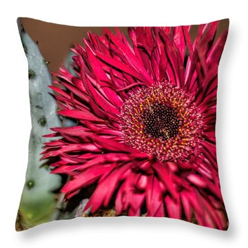 Throw Pillow featuring the photograph Red Daisy And The Cactus by Diana Mary Sharpton