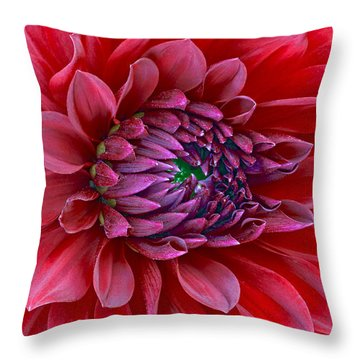 Red Dalia Up Close Throw Pillow by James Steele