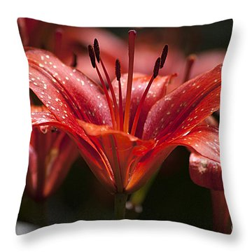 Red Day Lily 20120615_52a Throw Pillow by Tina Hopkins