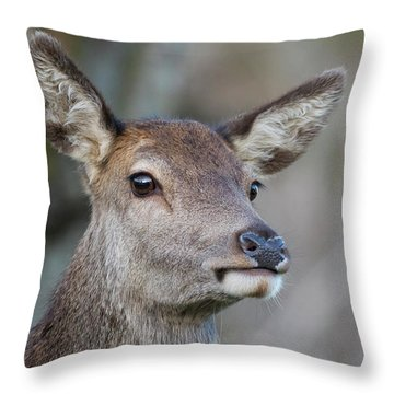 Throw Pillow featuring the photograph Red Deer Hind - Scottish Highlands by Karen Van Der Zijden