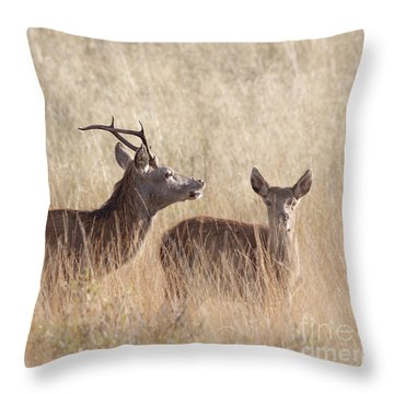 Red Deer Stag And Hind Throw Pillow