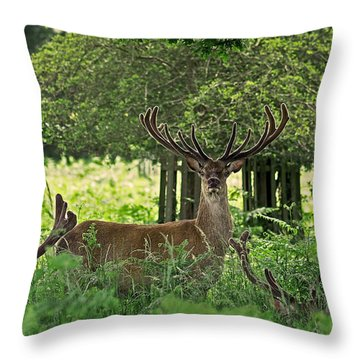 Throw Pillow featuring the photograph Red Deer Stag by Rona Black
