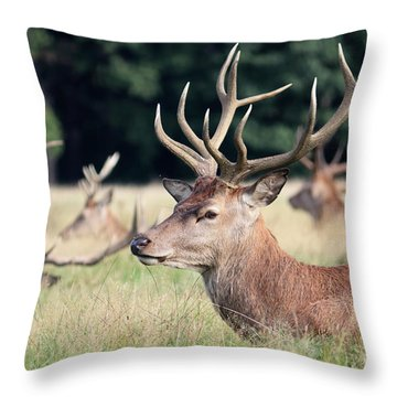 Red Deer Stags Richmond Park Throw Pillow