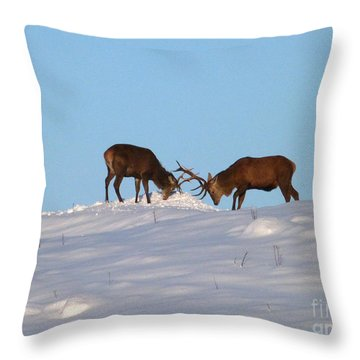Red Deer Stags - Winter Sparring Throw Pillow