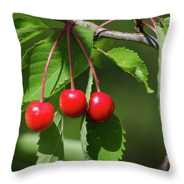 Throw Pillow featuring the photograph Red Delicious by Kennerth and Birgitta Kullman