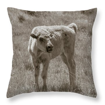 Throw Pillow featuring the photograph Red Dog Buffalo Calf by Rebecca Margraf