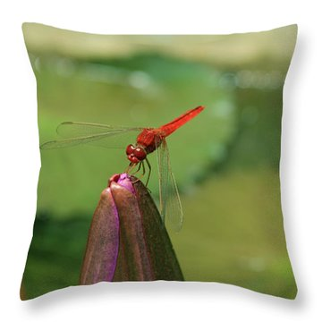 Red Dragonfly At Lady Buddha Throw Pillow