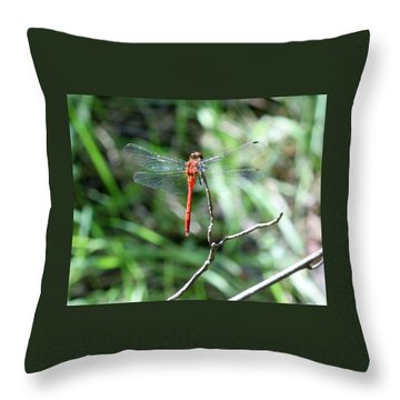 Throw Pillow featuring the photograph Red Dragonfly by Karen Silvestri