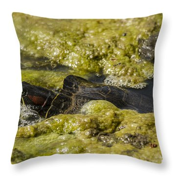 Red-eared Slider Throw Pillow