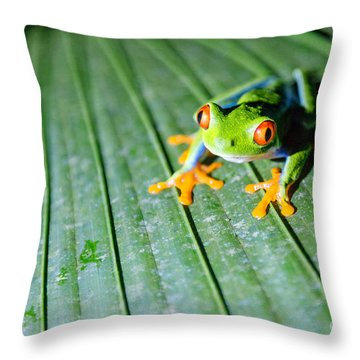Red Eyed Frog Close Up Throw Pillow by Matteo Colombo
