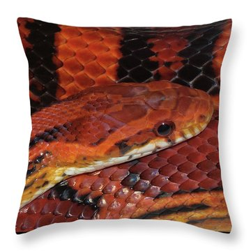 Red Eyed Snake Throw Pillow by Patricia McNaught Foster