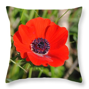 Red Anemone Coronaria 4 Throw Pillow