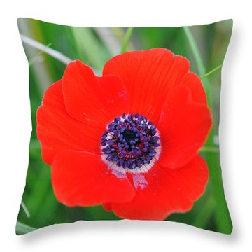 Red Anemone Coronaria 3 Throw Pillow