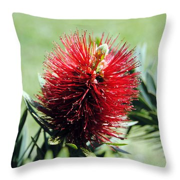 Callistemon - Bottle Brush 7 Throw Pillow