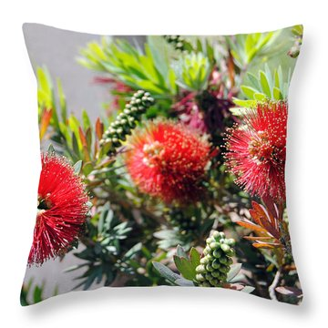 Callistemon - Bottle Brush 6 Throw Pillow