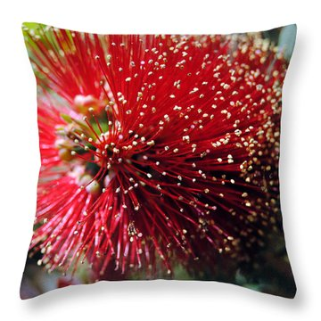 Callistemon - Bottle Brush 5 Throw Pillow