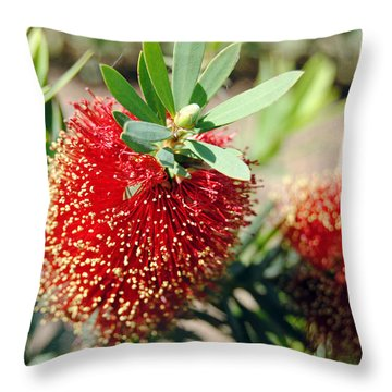 Callistemon - Bottle Brush 4 Throw Pillow