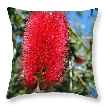 Callistemon - Bottle Brush 2 Throw Pillow
