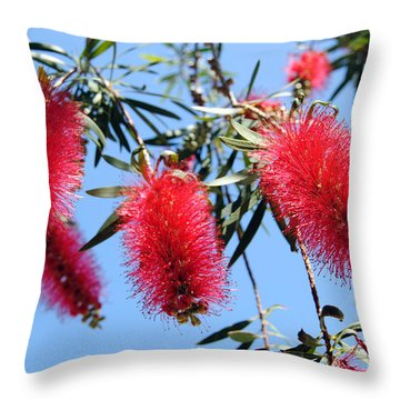 Callistemon - Bottle Brush 3 Throw Pillow