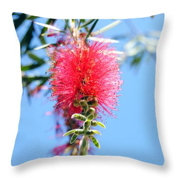 Callistemon - Bottle Brush 1 Throw Pillow
