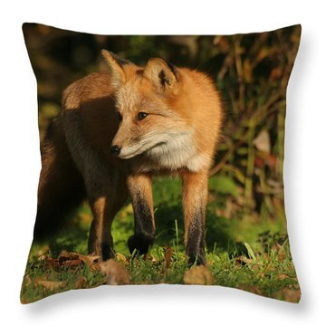 Throw Pillow featuring the photograph Red Fox by Doris Potter