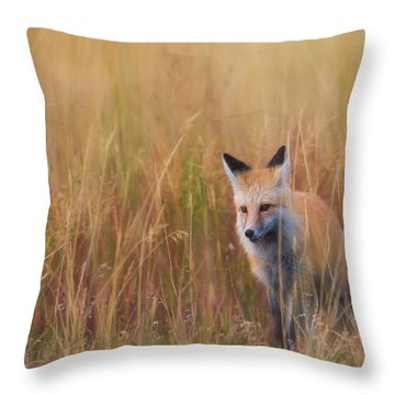 Throw Pillow featuring the photograph Red Fox Hunting  by Kelly Marquardt