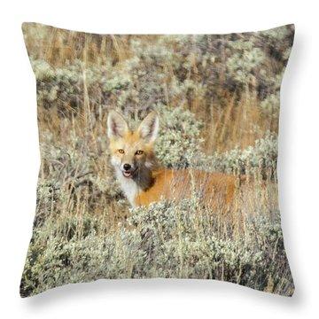 Red Fox In Sage Brush Throw Pillow