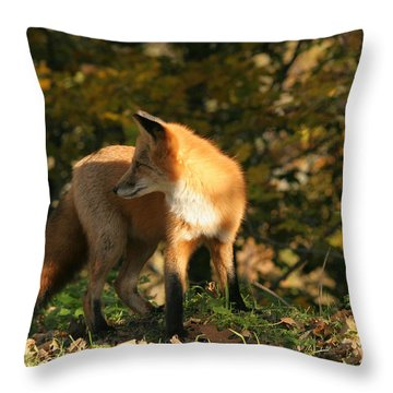 Throw Pillow featuring the photograph Red Fox In Shadows by Doris Potter