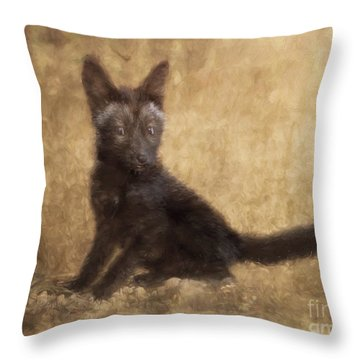 Red Fox Kit Black Phase Digital Photo Painted Captive Throw Pillow