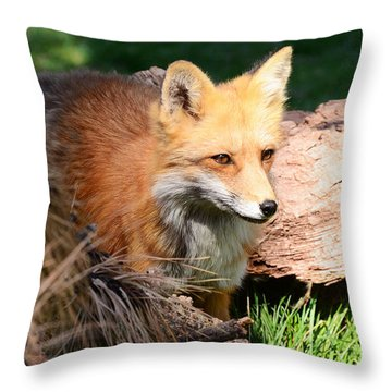 Red Fox On Patrol Throw Pillow