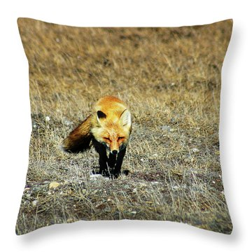 Throw Pillow featuring the photograph Red Fox On The Tundra by Anthony Jones